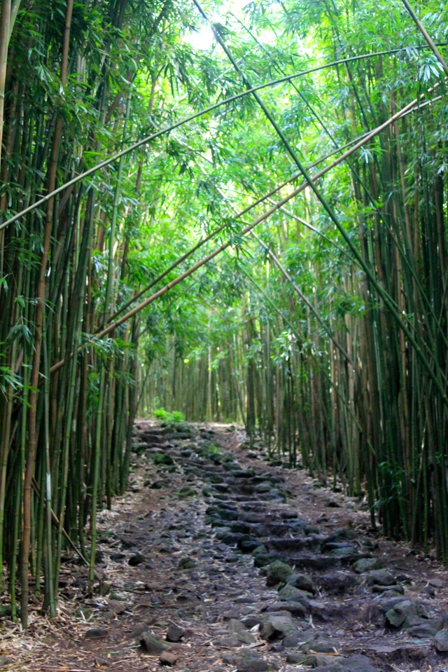 Bamboo Forest along the hike